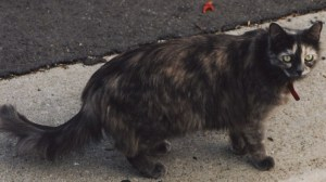 Sassythecat2